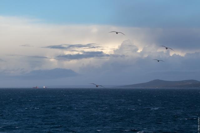 Zurück auf den Falklands
