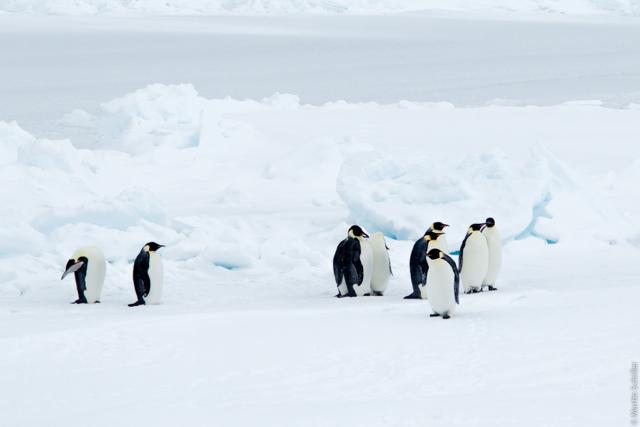 Ice-Camp und neugierige Kaiserpinguine