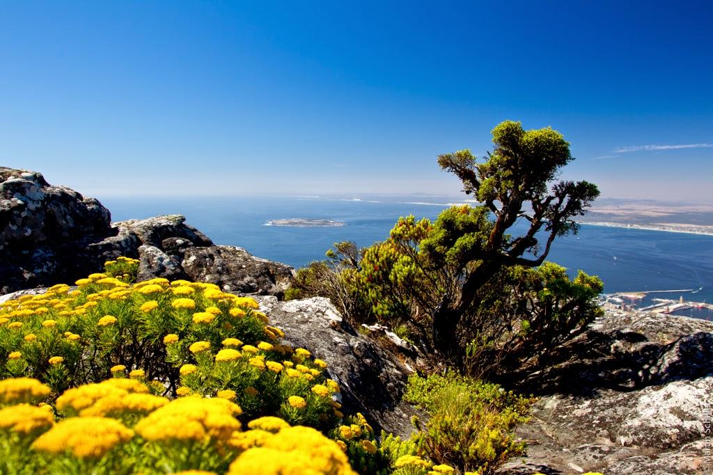 Kapstadt im Sommer